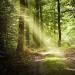 Lassen Sie sich von den heimischen Waldwegen verzaubern (Foto: Ernst Böhm)