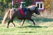 Trekker Sattel Pony Luxus